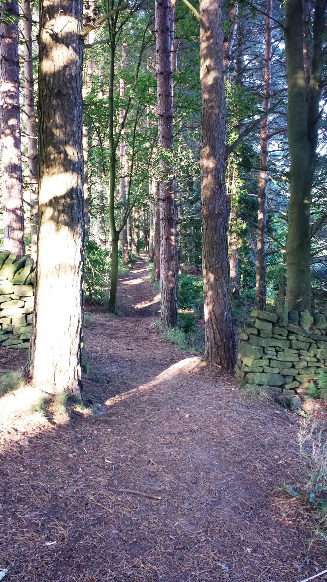 Die letzte Etappe führt mitten durch einen Zauberwald.