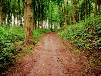 Der Wolds Way führt durch mehrere Waldstücke.