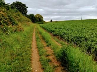 Der Pfad führt zum größten Teil direkt über Farmland.