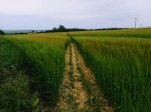 Eines der letzten Felder vor der Küste.